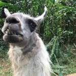 Harga Tiket Masuk Taman Safari Prigen Pasuruan Terbaru